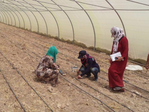 Humanitäre Hilfe Irak - Kleinbauern und Flüchtlinge kurbeln die Wirtschaft an